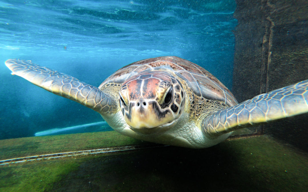 What makes turtles cool?