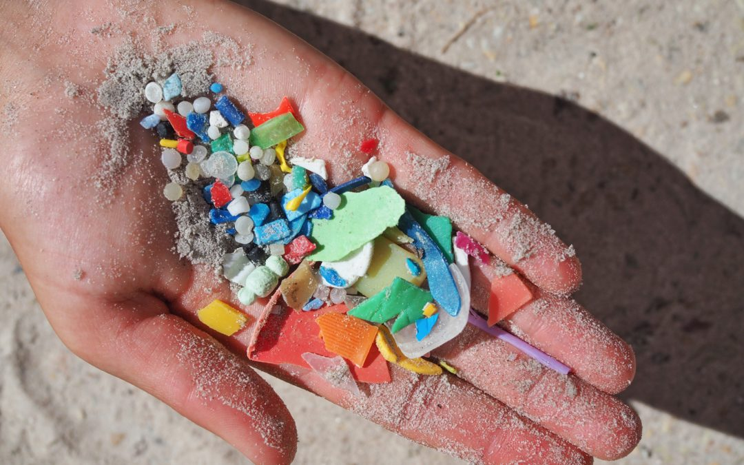 Microplastics: revealing the true impact they have on elasmobranchs