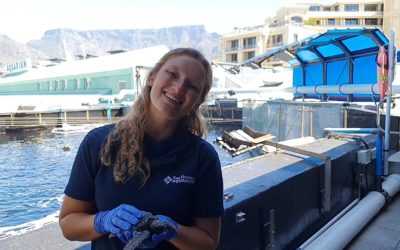 Internship research project: Plastic in post-hatchling loggerhead turtles